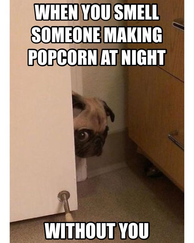 Best Funny Quotes Pug Its Popcorn Time Oh There Marking It