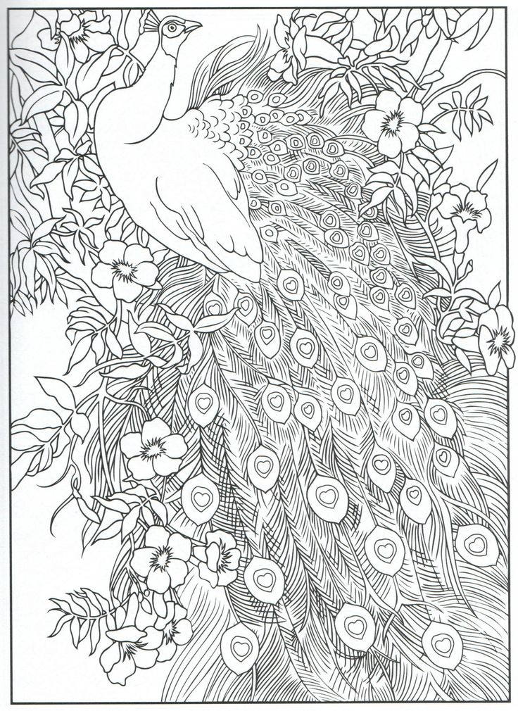 Quotes About Love For Him : Peacock Feather Coloring Pages Colouring Adult  Detailed Advanced Printable Kleur… – OMG Quotes Your Daily Dose Of  Motivation & Positivity, Quotes, Sayings & Short Stories