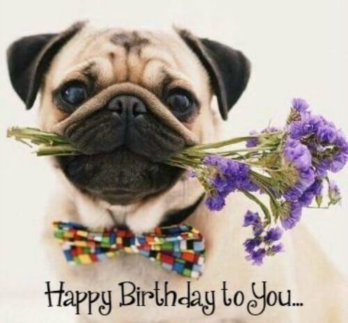 Best Birthday Quotes Happy Birthday Pics Dogs Funny Pug Wishing Happy Birthday To You Omg Quotes Your Daily Dose Of Motivation Positivity Quotes Sayings Short Stories