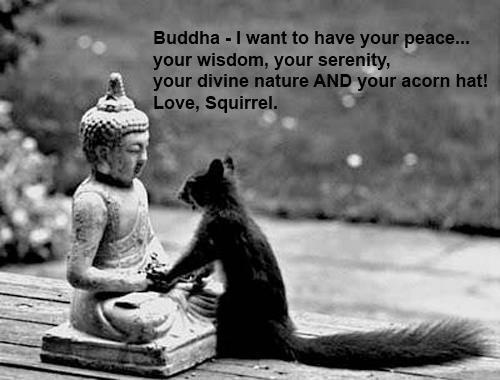Serenity Quotes | Best Funny Quotes Buddha I Want To Have Your Peace Your Wisdom