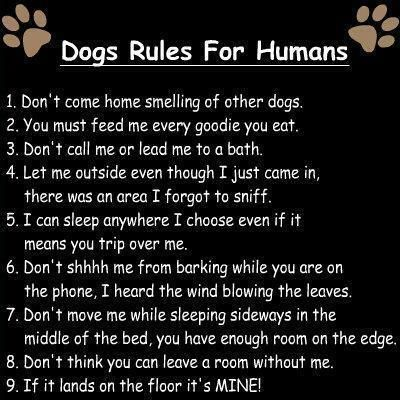 Best Funny Quotes : Dog Rules For Humans | Baylie Dog – OMG