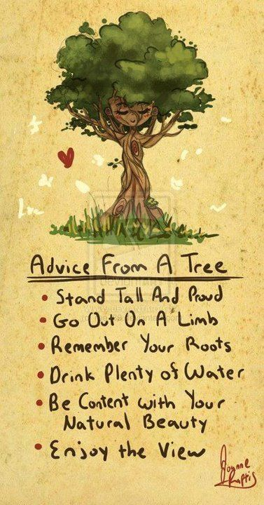 Inspirational & Positive Life Quotes : advice from a tree ...