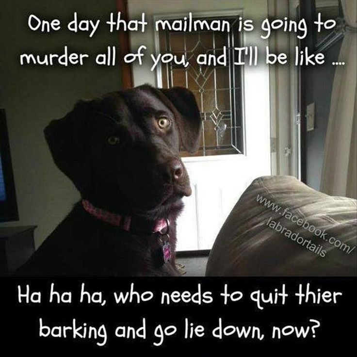 Best Funny Quotes : Funny Animal Pictures Of The Day – 22 Pics – OMG