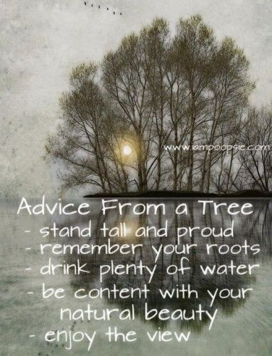 Advice From A Tree Stand Tall And Proud Remember Your Roots