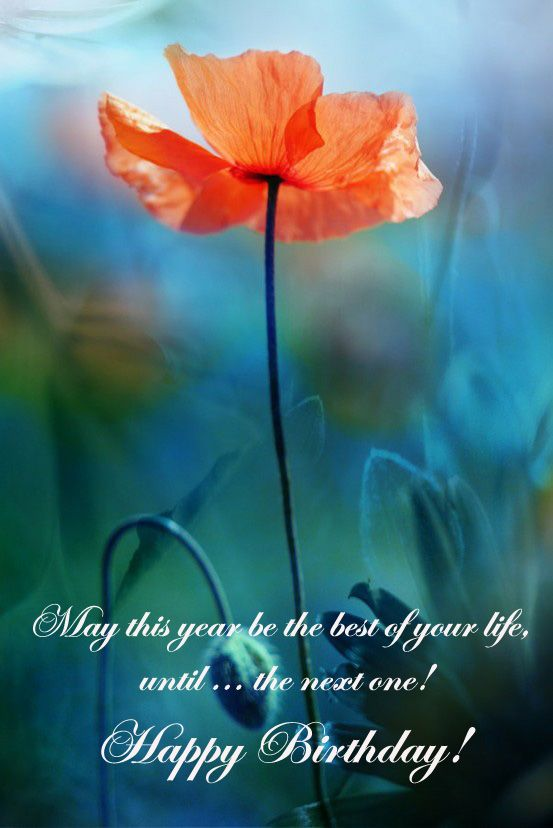 Birthday Card With Poppy And Greeting Words