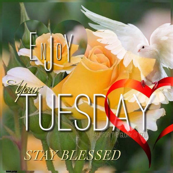 New Good Morning Tuesday Quotes And Sayings Paulcong