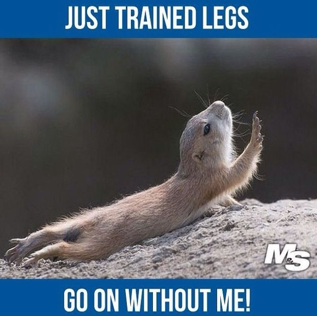 Best Health and Fitness Quotes : Go on without me! Leg Day ...
