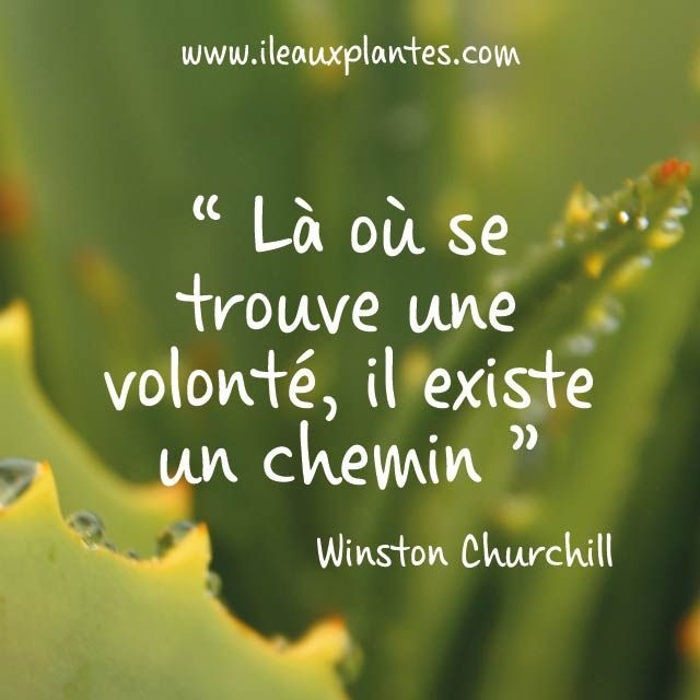 Positive Quotes La Citation Du Jour Par Winston Churchill
